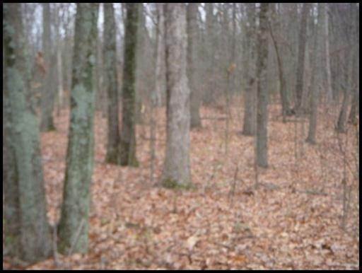 Land for Sale at 918 & 1202 Mccubbins Road Strawberry Plains, Tennessee 37871 United States