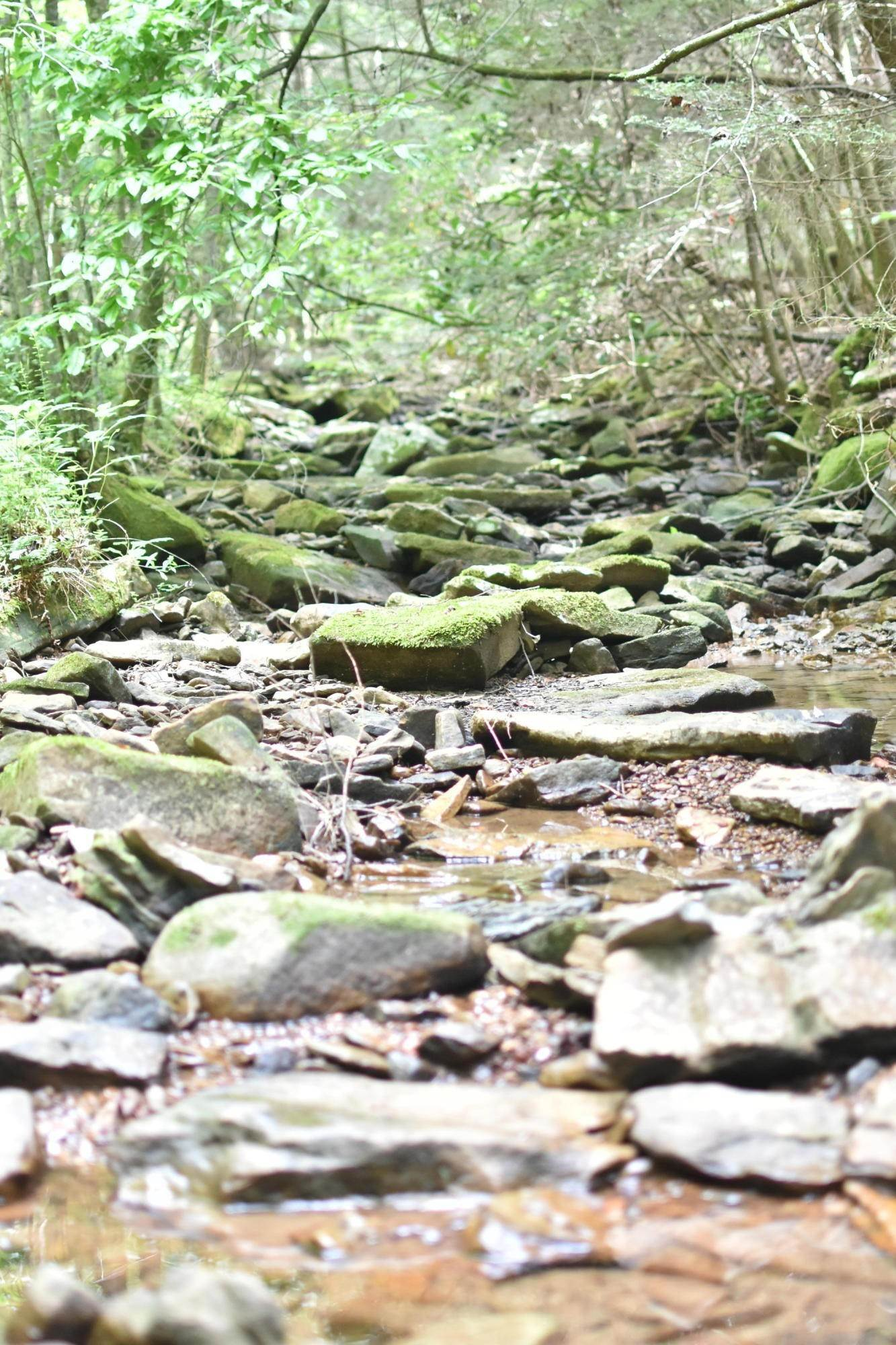 Land for Sale at Seed Tick Road Harriman, Tennessee 37748 United States