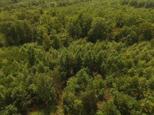 Land for Sale at 104.55ac Brush Creek Road Pikeville, Tennessee 37367 United States