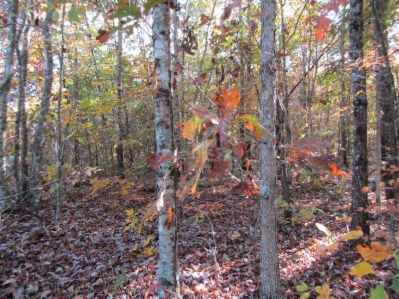 Land for Sale at lot 33 Panther Falls Road Wilder, Tennessee 38589 United States