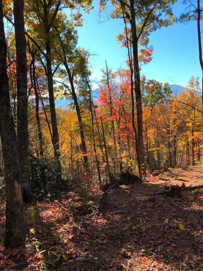 Land for Sale at Parcel 77 Birds Creek Road Sevierville, Tennessee 37876 United States